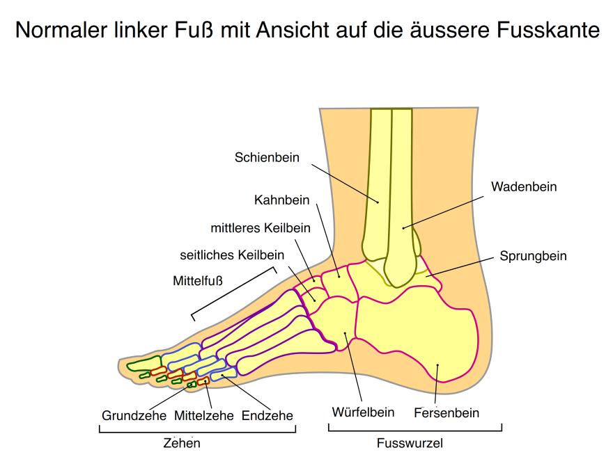 Fuß Füße Sprunggelenk Zehen Arztpraxis Lüneburg Dr. med. Thomas Hartmann